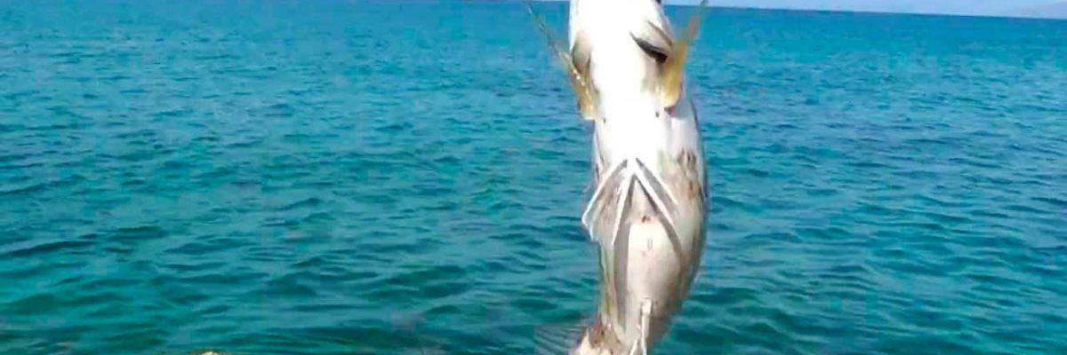 Морская рыбалка на Крите (фото 2)