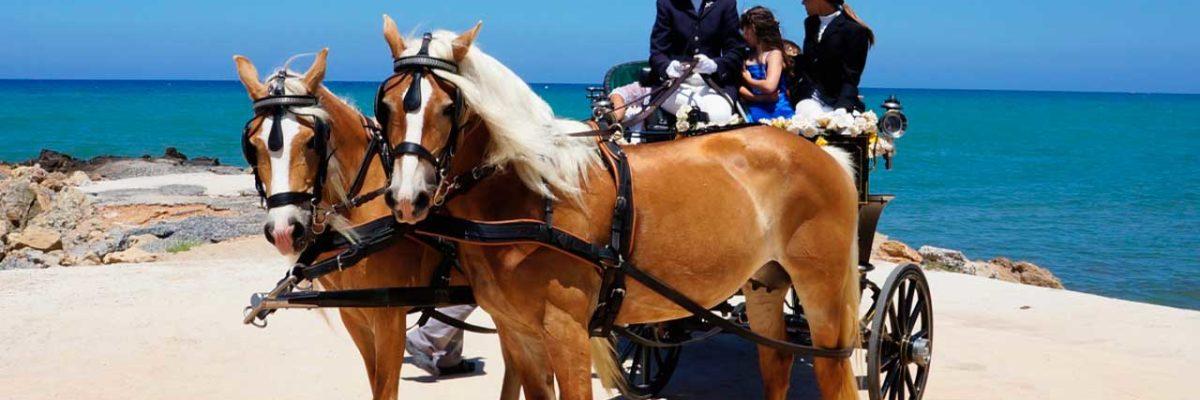 Прогулка на лошадях по острову Крит (фото 3)